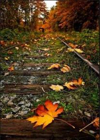 leaf-on-track